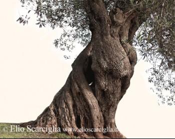 L'albero e la forma