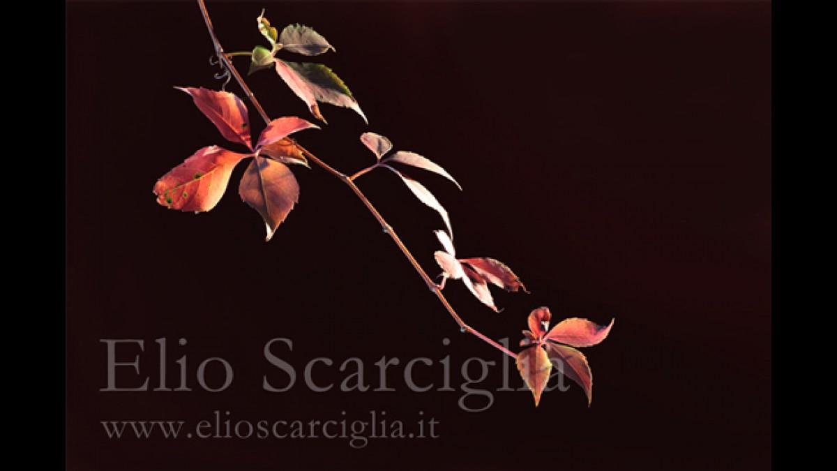 Il tempo di una foglia d'autunno
