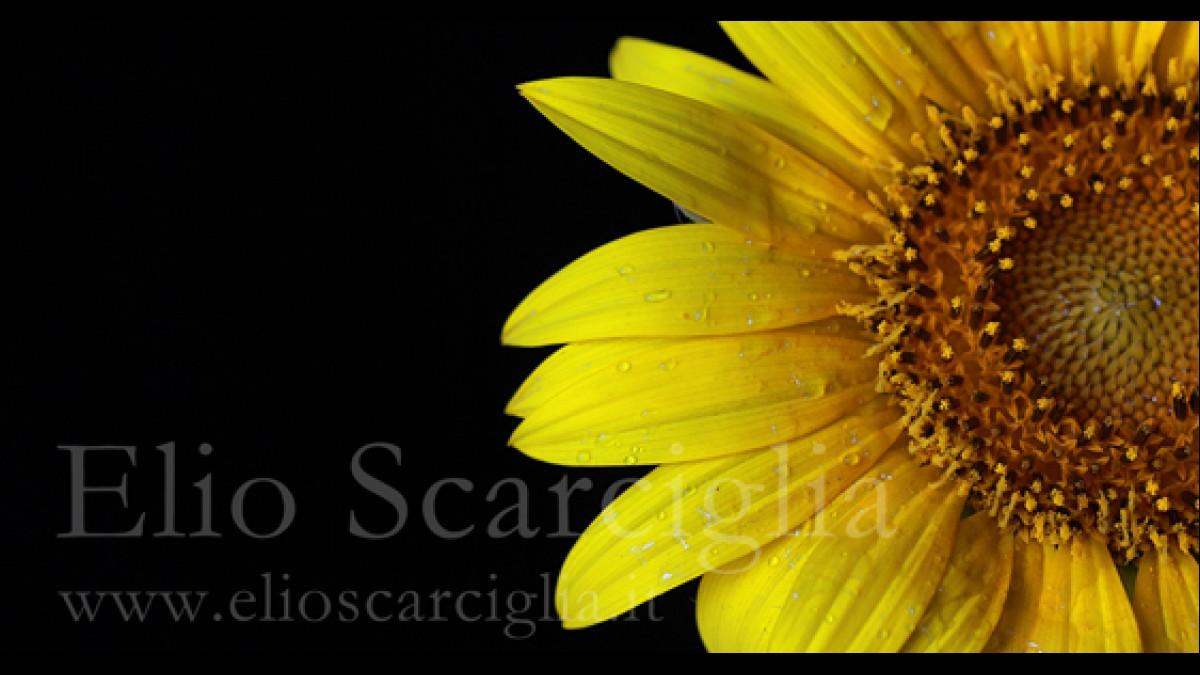 La solitudine, che tu mi hai regalato, io la coltivo come un fiore (S. Endrigo)